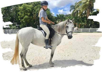 Adopt a horse peaceful ridge rescue