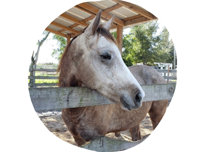 luna-thoroughbred-for-adoption